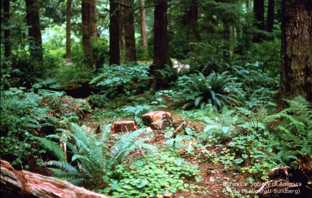 Community and ecosystem dynamics for Forest floor definition